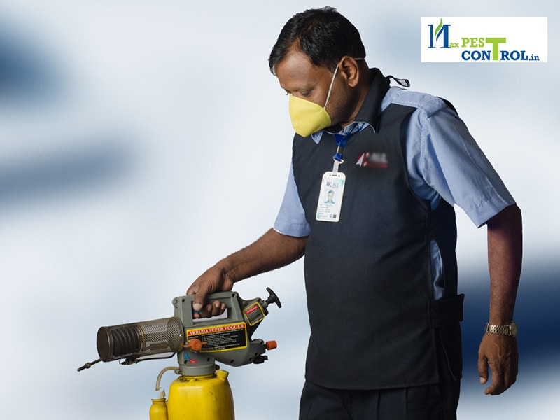 Max Pest Control - Exclusive Discount On Pest Control In Chandigarh